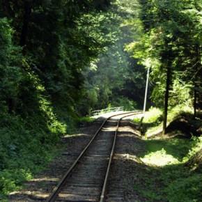 【車窓から見た沿線風景部門】 森のトンネル